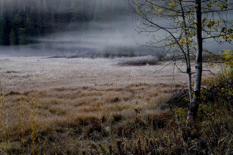 薄雾早晨定了调子版本 免版税库存图片