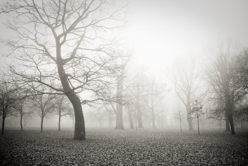 薄雾早晨 免版税图库摄影