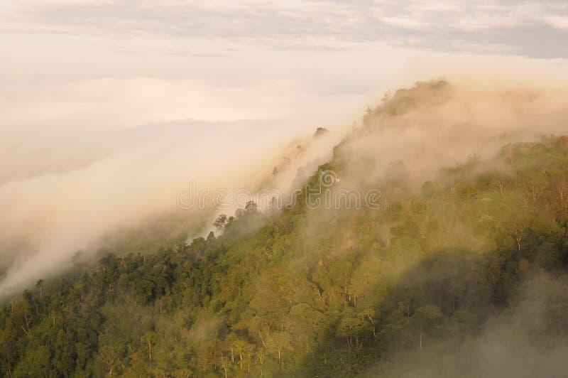 薄雾海在山上面的  免版税库存图片