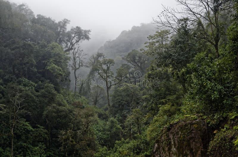 薄雾的森林 免版税图库摄影