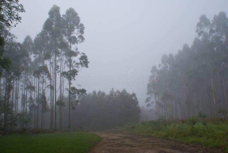 薄雾的种植园 免版税库存照片
