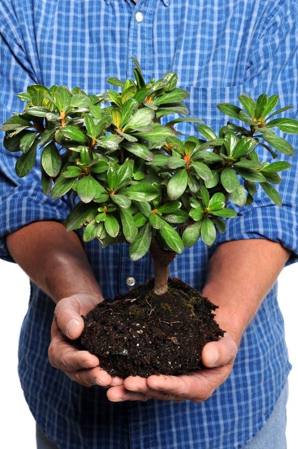 藏品人小的结构树 库存图片