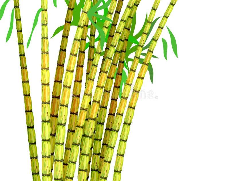 藤茎种植糖料作物 皇族释放例证