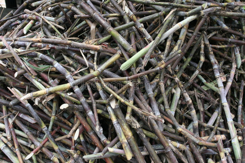 Download 藤茎粗糖 库存照片. 图片 包括有 增长, 原始, 亚马逊, 成份, 拉丁语, 委内瑞拉, 产物, 问题的, 藤茎 - 176334