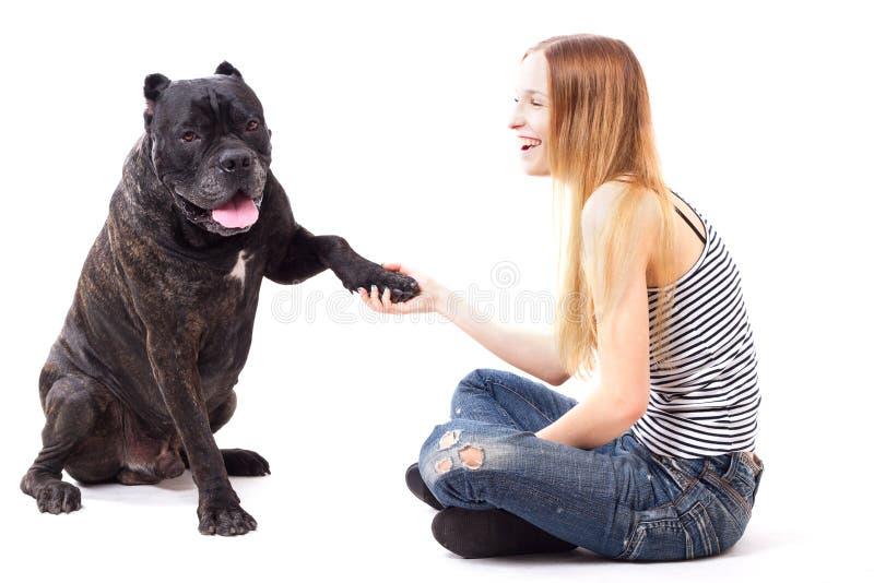 藤茎Corso狗执行一个命令给爪子 免版税库存照片