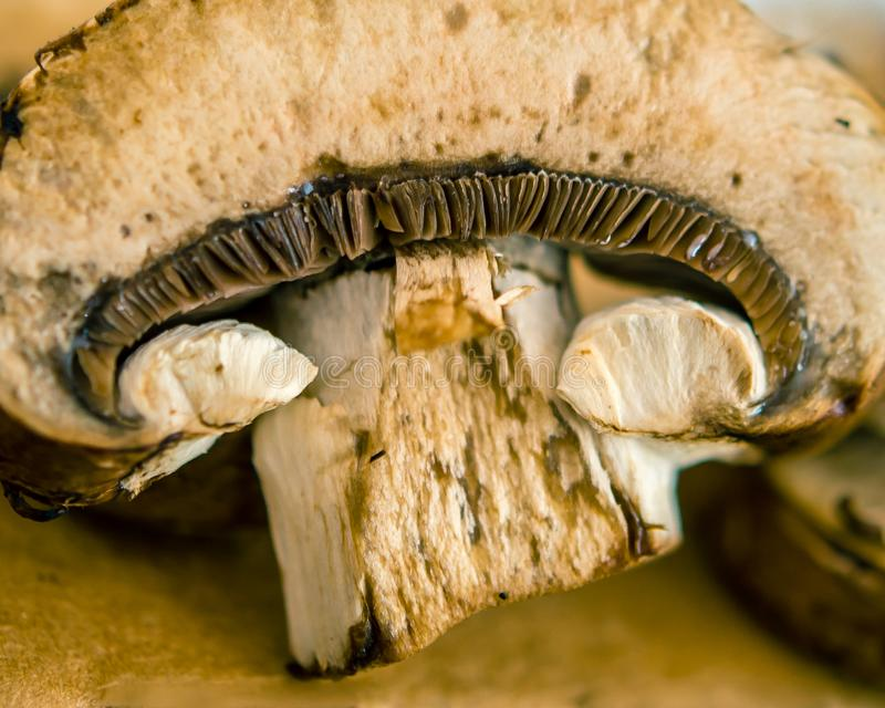 蘑菇切片特写镜头 免版税图库摄影