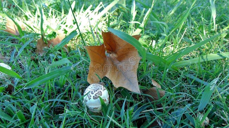 蘑菇和叶子 库存图片