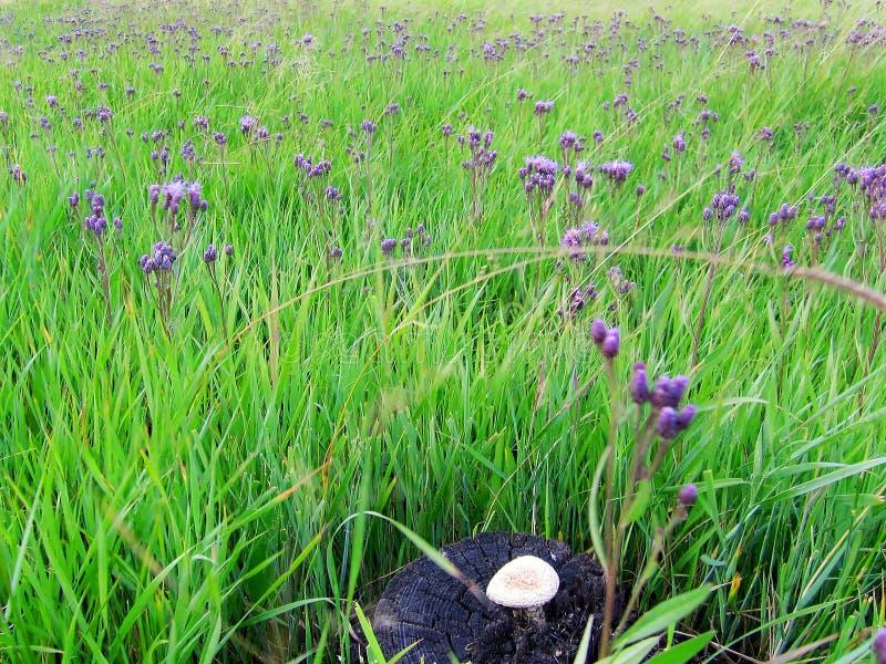 蘑菇和花 免版税库存照片