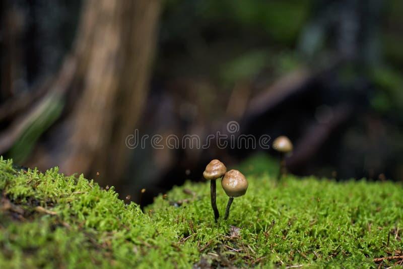 蘑菇和青苔不可思议的森林特写镜头射击  库存图片