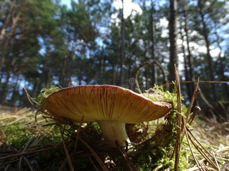 蘑菇在森林里 免版税库存照片
