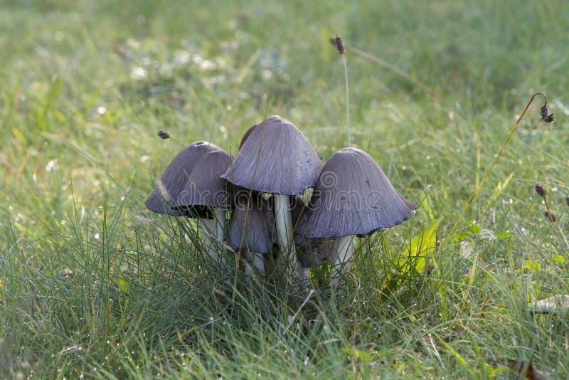 蘑菇在狂放的森林里 库存图片