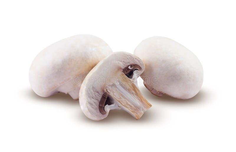 蘑菇在白色背景被隔绝 库存图片