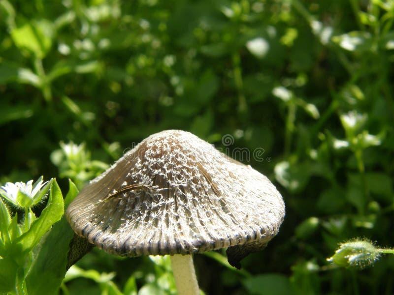 蘑菇在阿拉斯加 免版税库存图片