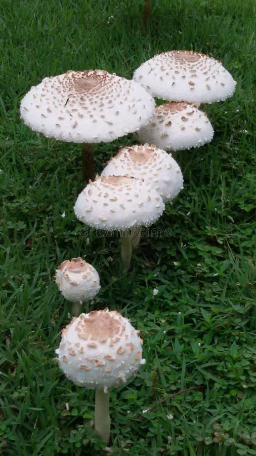 蘑菇在雨天以后 库存照片