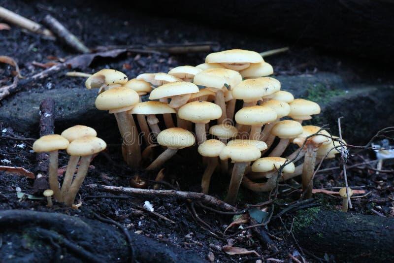 蘑菇在Tazonga动物园悉尼里 库存图片