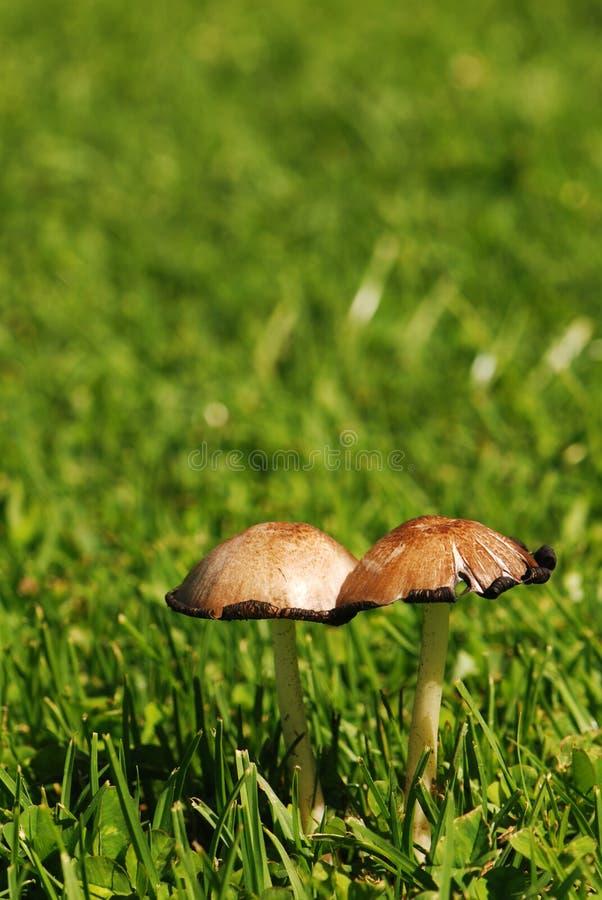 蘑菇孪生 免版税库存照片