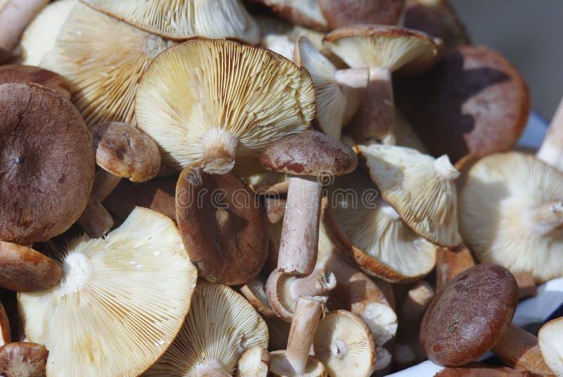 蘑菇小山 免版税库存图片