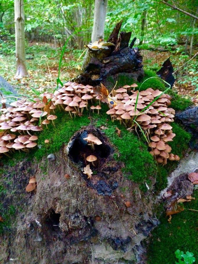 蘑菇小山 图库摄影