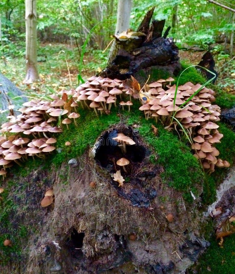 蘑菇小山 库存图片