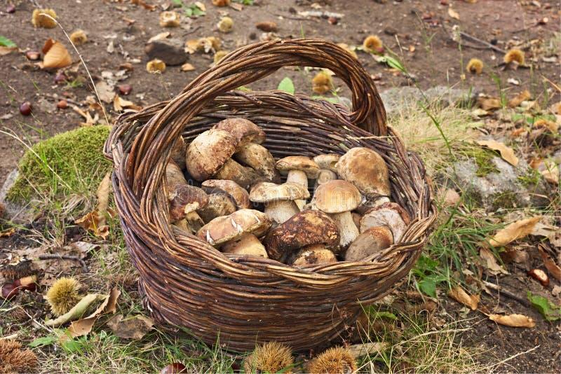 蘑菇挑选 免版税库存图片