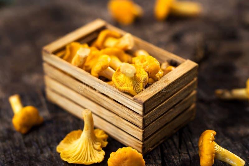 黄蘑菇新鲜的蘑菇 免版税库存照片