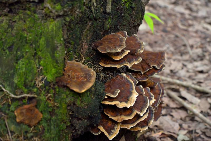 蘑菇本质上 库存图片
