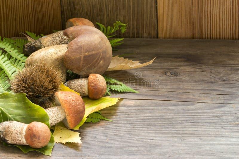 蘑菇牛肝菌蕈类和leccinum在木背景 免版税库存照片