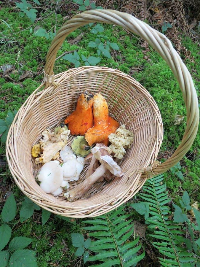 蘑菇狩猎 免版税图库摄影