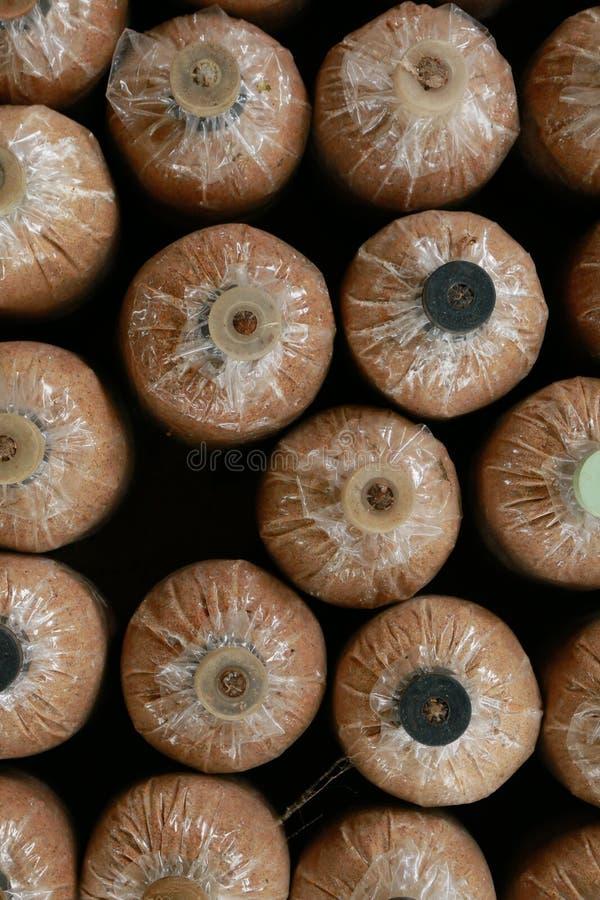 蘑菇瓶 库存图片