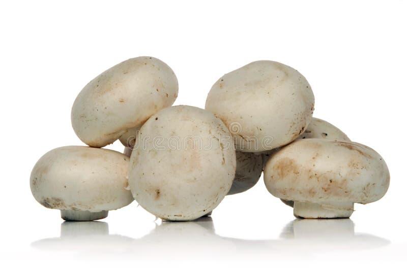 蘑菇白色 库存照片