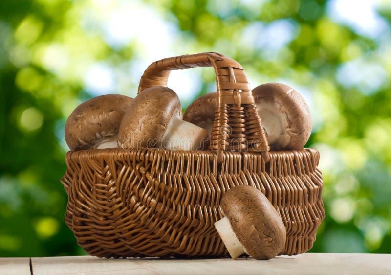 蘑菇蘑菇的图象在篮子关闭的 库存照片