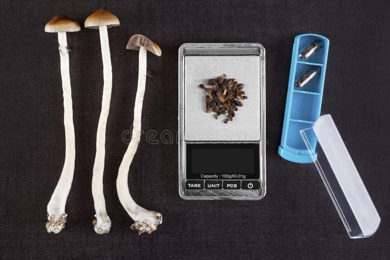 蘑菇迷幻药蘑菇 免版税库存照片