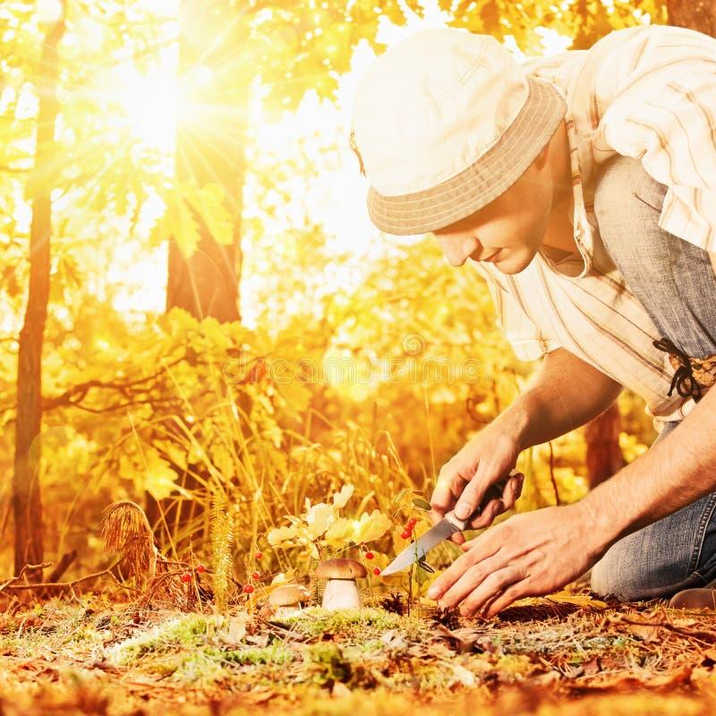 蘑菇采摘在森林里 免版税库存照片