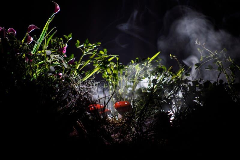 蘑菇 在奥秘黑暗的森林特写镜头的幻想发光的蘑菇 伞形毒蕈muscaria,在青苔的蛤蟆菌在森林魔术mushroo 免版税库存照片