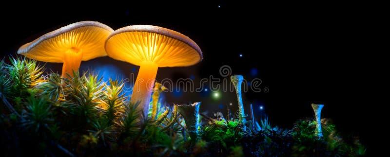 蘑菇 幻想发光的蘑菇在奥秘黑暗森林里 图库摄影