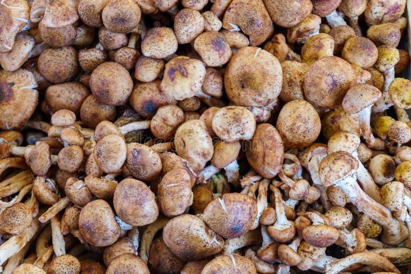 蘑菇-有机产物在农夫市场上 免版税图库摄影