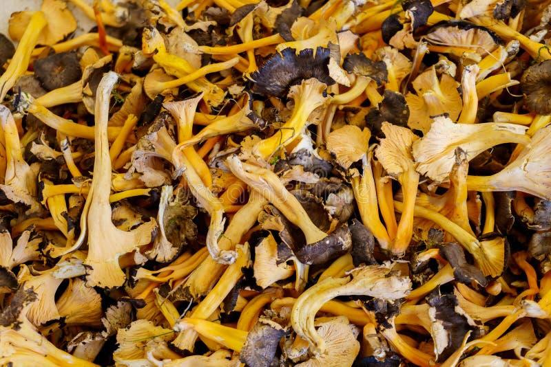 蘑菇-有机产物在农夫市场上 库存照片