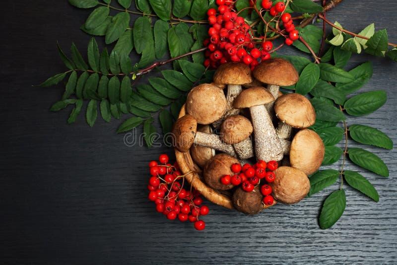 蘑菇 有机食品成份 免版税库存图片