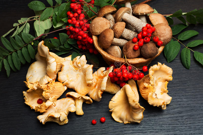 蘑菇 有机食品成份 免版税库存照片