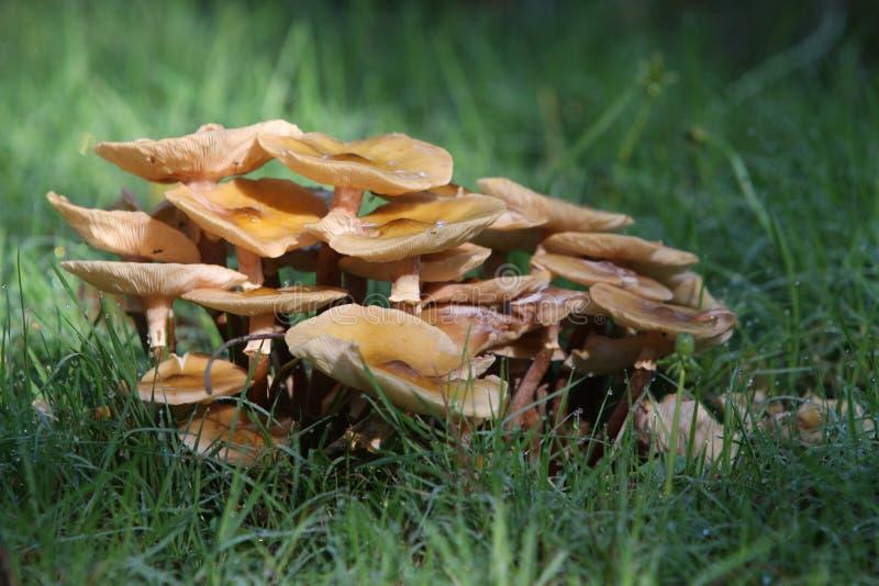 Download 蘑菇 库存照片. 图片 包括有 蘑菇, 详细资料, 本质, 森林, 宏指令, 对象, 生活, 食物, 自治权 - 30325572