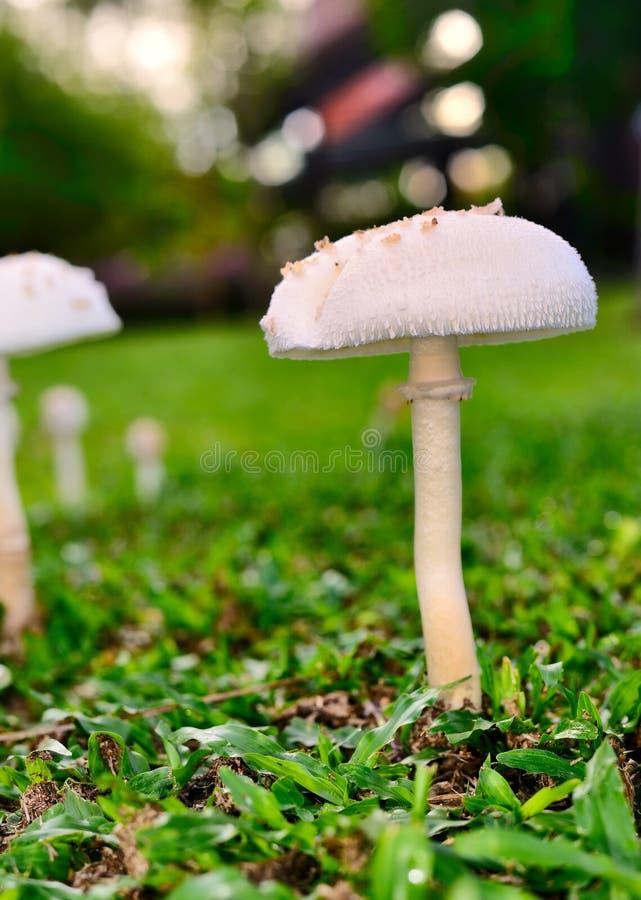 蘑菇 免版税库存照片
