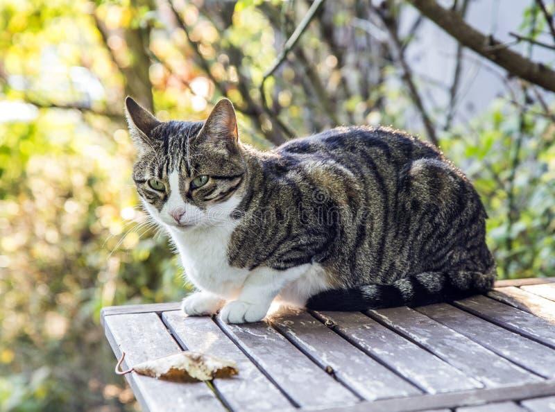虎斑猫在庭院里 免版税库存图片