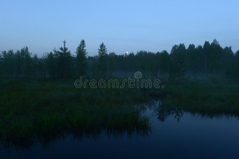 虚度在森林上的蓝色夜空在黎明前 免版税库存照片