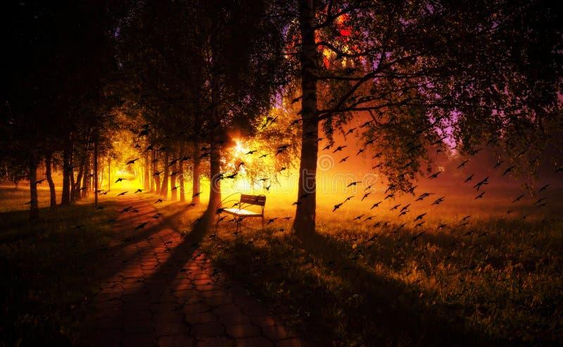 虚度夜长凳拼贴画在薄雾黑暗的树胡同的有灯的a 免版税库存图片