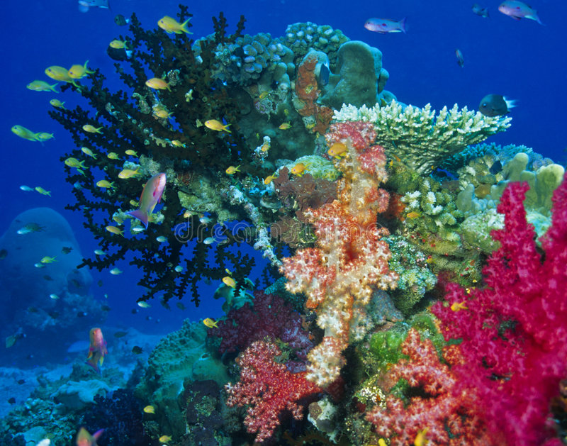 虚拟珊瑚礁场面 库存照片