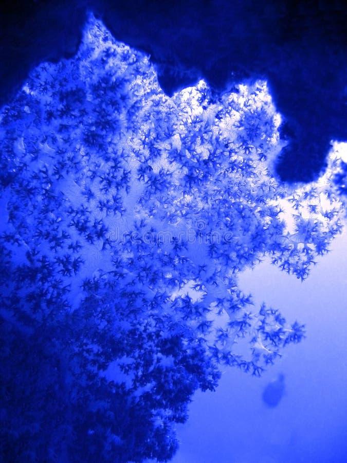虚拟蓝色珊瑚作用 库存图片