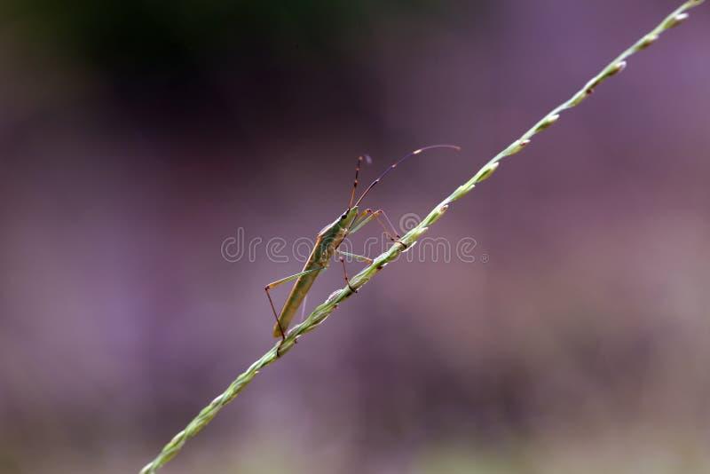 虫的昆虫 免版税库存照片