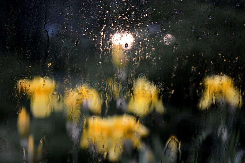 虹膜在雨中! 免版税库存图片