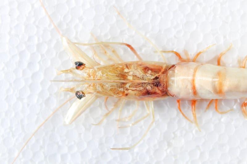 虾有白色背景 免版税库存图片