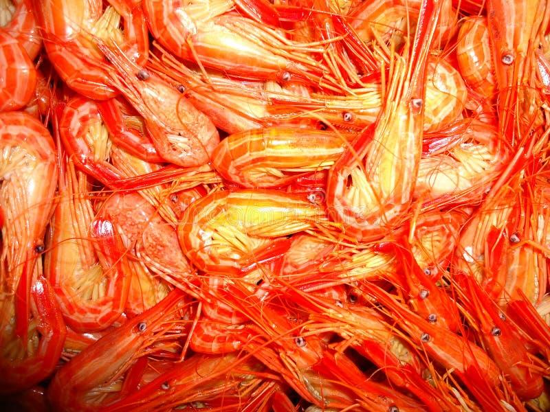 虾海鲜抓住是秀丽 免版税库存图片